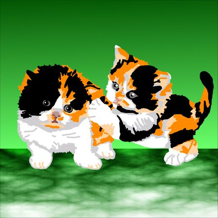 Two Persian Calico kittens playing tag on a green background. photo