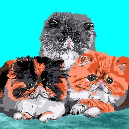 Three Persian kittens resting on a blue carpet. Stock Photo