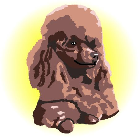 A brown poodle relaxing lying down with a yellow color spot in the background - a raster illustration. illustration