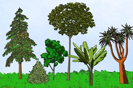 raster artistic: Six artistic trees from different parts of the world - a raster illustration.