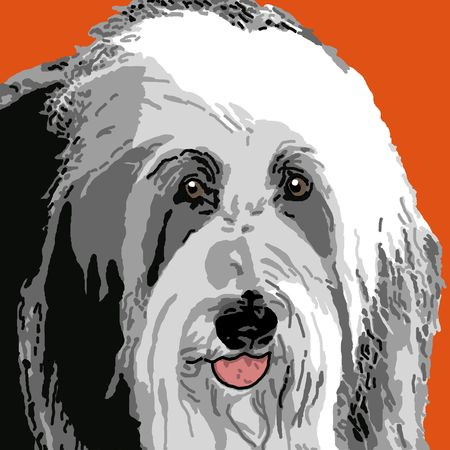A portrait of an adult sheepdog on an orange background.