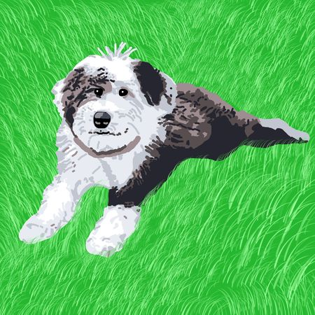A happy sheepdog puppy happily lying in the grass.