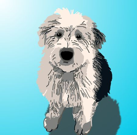 begging: A sheepdog puppy sitting on a blue background with a drop shadow.