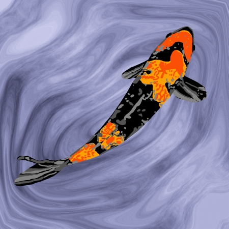 gracefully: A black-and-orange koi swimming gracefully in a fish pond.