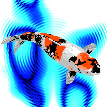 A black, orange, and white koi swimming peacefully in a pond.