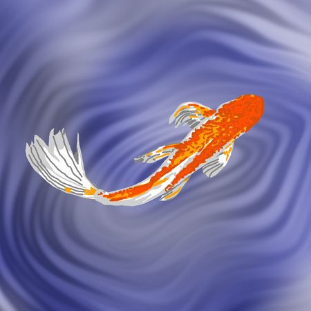 A beautiful orange butterfly koi swimming gracefully in a fish pond. Zdjęcie Seryjne