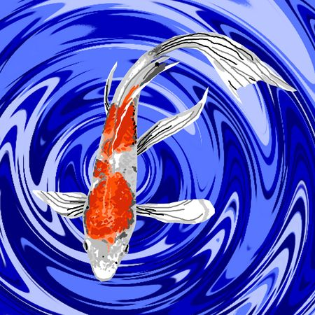 Une belle couleur orange et blanc koi nage papillon gracieusement dans un étang à poissons. Banque d'images - 4923233