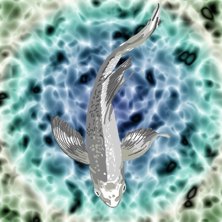 gracefully: A beautiful silver butterfly koi swimming gracefully in a pond. Stock Photo