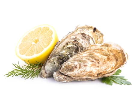 Fresh raw oysters and lemon on white background. Archivio Fotografico