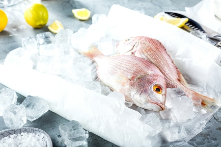 raw sea bream fish dorado in ice on market with copy space, top view.