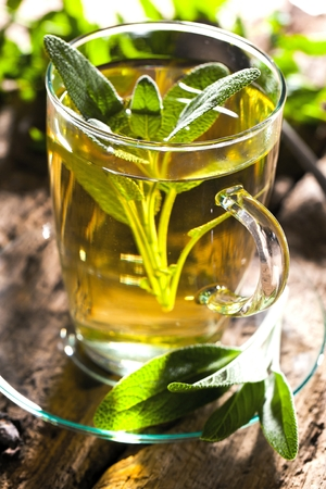 Sage tea and sage leaves. Infusion made from sage leaves. Medicinal herb Salvia officinalis. Stock Photo