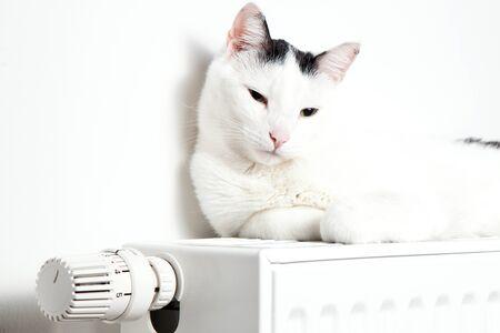 Beautiful white cat relaxing on the radiator closeup Stok Fotoğraf - 150559623