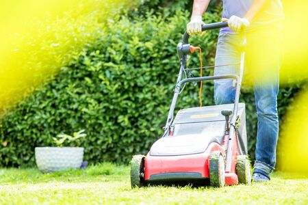 Summer and spring season sunny lawn mowing in the garden
