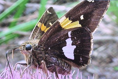 BUTTERFLY COLLECTING NECTAR STOCK PHOTO Banco de Imagens