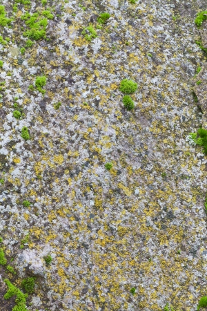 Close up of a old stone texture background  photo