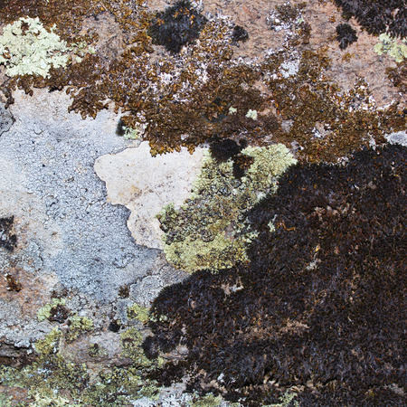 symbiosis: Dry Moss on the  Old Stone. Background, Texture. Stock Photo