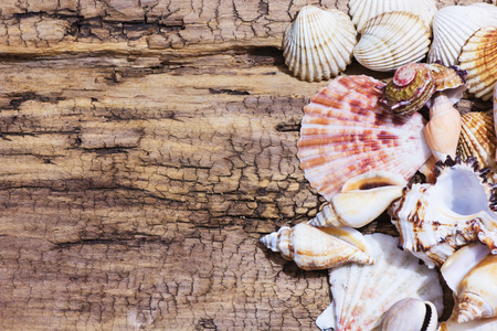 Collection of different sea shells from the Aegean Sea. Summer background.