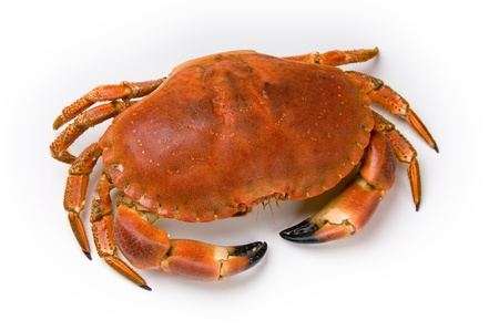 Prepared crab on white background Stock Photo