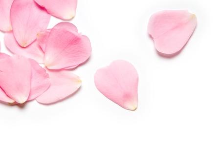 Pétales de rose roses sur fond blanc Banque d'images