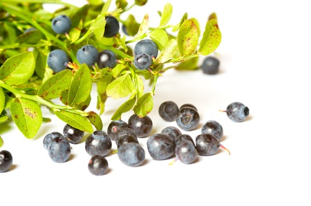 Branch of blueberries on white background Stock Photo - 8550479