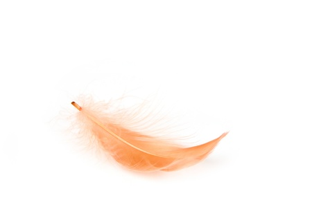 Red feather on white background Standard-Bild