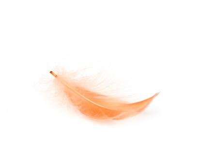 Red feather on white background Zdjęcie Seryjne