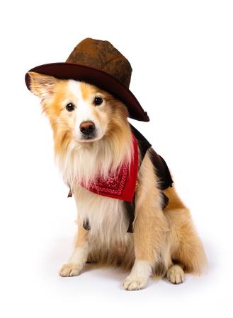 Hond met Cowboy kostuum Stockfoto