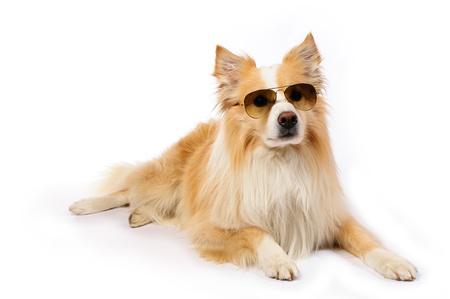 Cool hond met een zonnebril met achtergrond Stockfoto