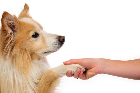 Echte vriendschap tussen hond en mens Stockfoto