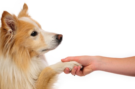 white paw: True friendship between dog and human
