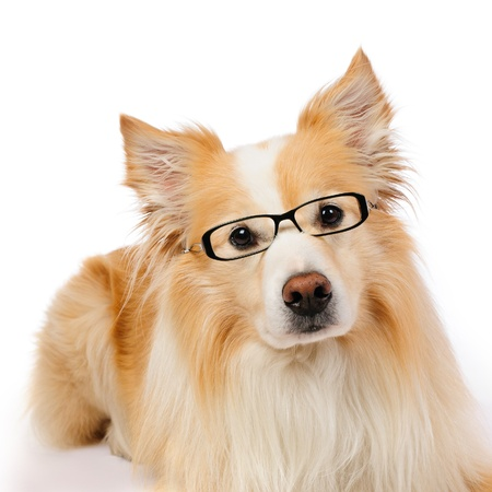 Intellectual dog Stock Photo