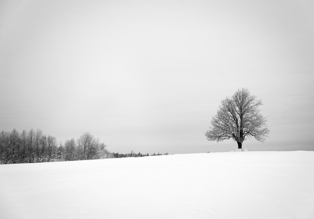 snow field: Winter with snow and a lonely tree in a field