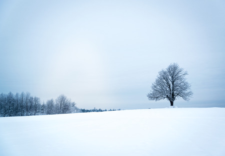 lonely tree: Lonely tree in a field. Winter and blue light.