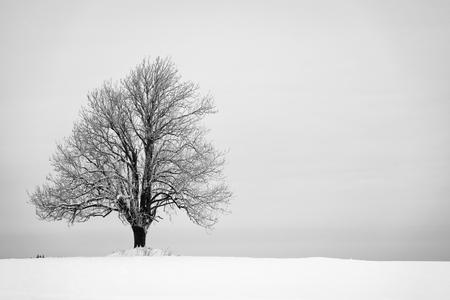Inverno con neve e un albero solitario in un campo