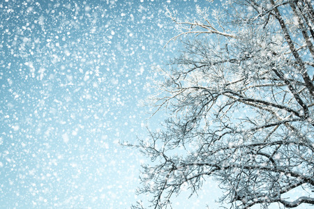 Looking up in a tree with snow and a sky with snow falling down. Stock Photo
