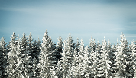 polar climate: Idyllic winter scene where it is snowing in the forest and you can see the snowflakes.