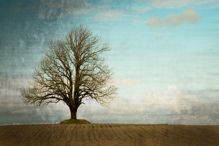 ash tree: Lonely ash tree on a field. Vintage and grunge style.