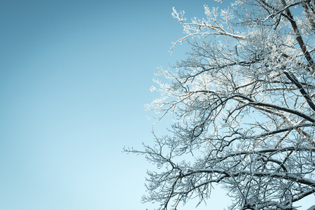 no movement: Looking up in a tree with snow and a blue sky