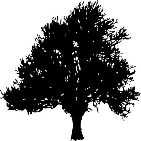 roble arbol: Vector silueta de un árbol