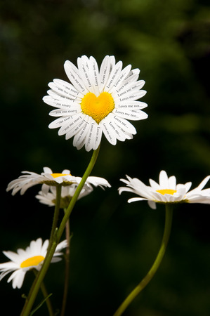 loves: Daisy with a yellow heart in the center and text on all the petals. Loves me, loves me not.