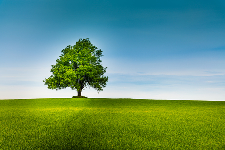 Lonely tree on a green field and blue sky