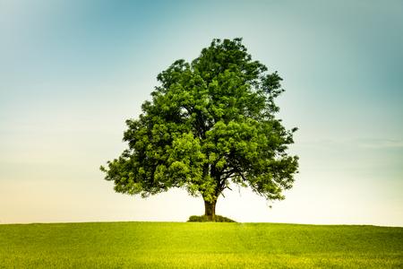 Árbol solo en el centro de un campo verde con un sentimiento retro