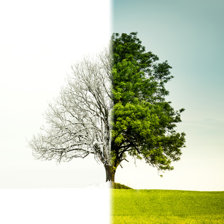 miracle tree: Tree change from winter to summer. The left side is winter and the right side is summer. Stock Photo
