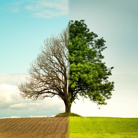 el cambio del árbol de la primavera al verano. El lado izquierdo es la primavera y el lado derecho es el verano.