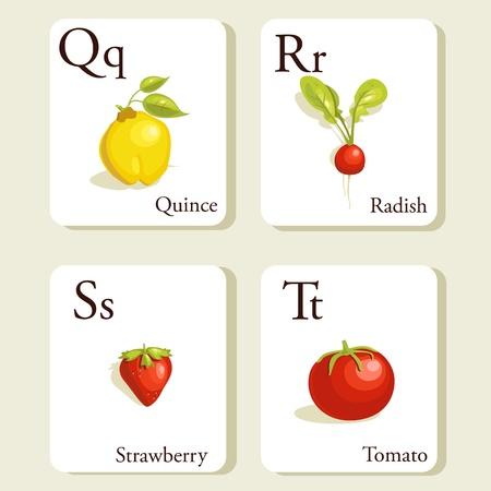Fruits and vegetables  alphabet cards , illustration, part 5of 7 Illustration