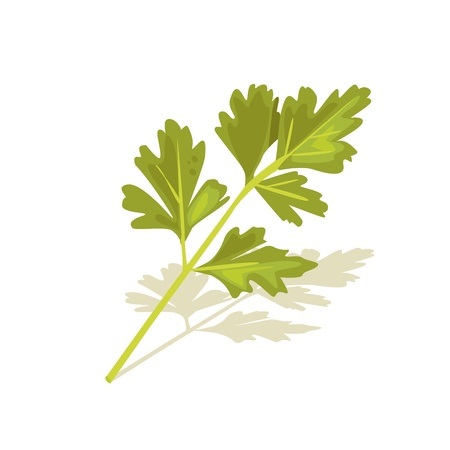 vector parsley Stock Vector - 9297519