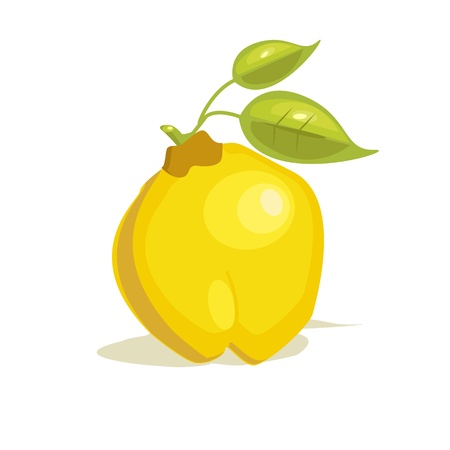 quince: quince vector