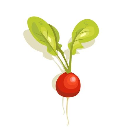 radish: radish vector