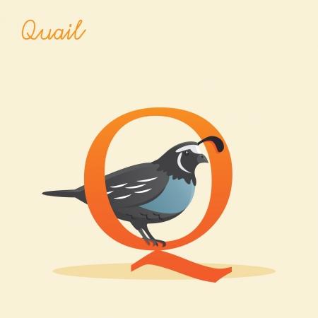 quail: Animal alphabet with quail illustration Illustration