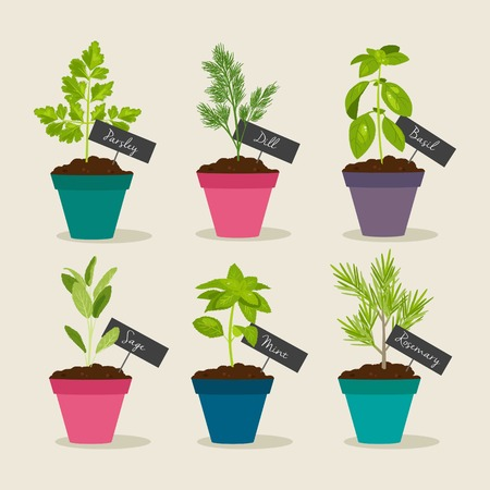 plant pot: Herb garden with pots of herbs, vector illustration